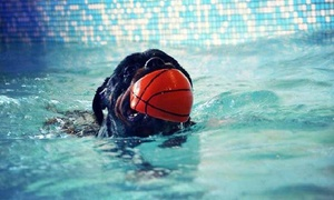 Dog Center: 30 ou 60 min de Pool Dog pour un ou deux chien dès 17,99 € chez Dog Center