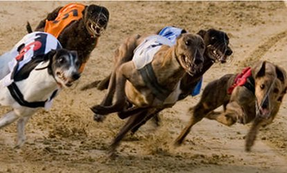 image for Greyhound Racing with Racecard, Meal and Drink for Two, 6 April - 29 June, Central Park Sittingbourne