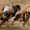 Dog Racing with Food and Drink