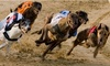 Central Park Sittingbourne - Central Park Stadium: Greyhound Racing with Racecard, Meal and Drink for Two, 6 April - 29 June, Central Park Sittingbourne