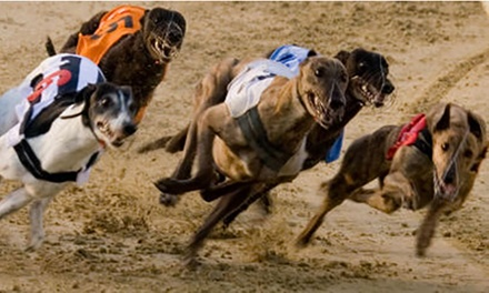 Greyhound Racing with Racecard, Meal and Drink for Two, 4 January 29 March, Central Park Stadium Sittingbourne