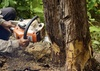 35% Off Tree Removal