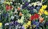 Wildflower Bulb Mix (100-Pack): Wildflower Bulb Mix (100-Pack)
