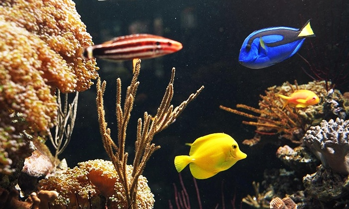 pet fish and aquarium service coral sea aquarium groupon