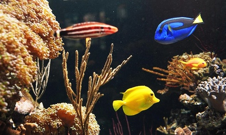 Pet Fish and Supplies or Aquarium and Pond Maintenance from Coral Sea Aquarium (Up to 54% Off)
