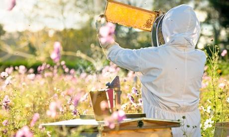 Curso online de apicultura con Plataformacción (93% de descuento)