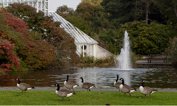 Terrific The Royal Botanic Gardens In Richmond Greater London  Groupon With Great Learn More About Groupons Merchant Reviews Policy With Beautiful Gardening Leave Letter Also The Garden School In Addition Images Of Fairy Gardens And Park Gardens Glasgow As Well As Small Garden Designs Pictures Additionally Garden Fencing Trellis From Grouponcouk With   Great The Royal Botanic Gardens In Richmond Greater London  Groupon With Beautiful Learn More About Groupons Merchant Reviews Policy And Terrific Gardening Leave Letter Also The Garden School In Addition Images Of Fairy Gardens From Grouponcouk