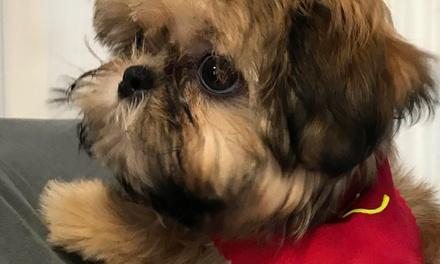 Kansas City Pets Deals In Kansas City Mo Groupon