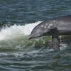 Up to 35% Off Dolphin Tour