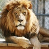 Up to 50% Off Admission to Emerald Coast Zoo