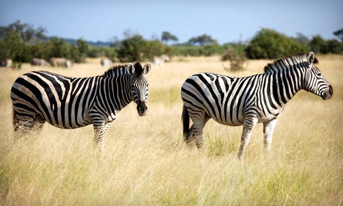 Nine-Day Kenyan Safari with Airfare - Odyssey Safaris: Nine-Day Kenyan Safari with Airfare from Odyssey Safaris