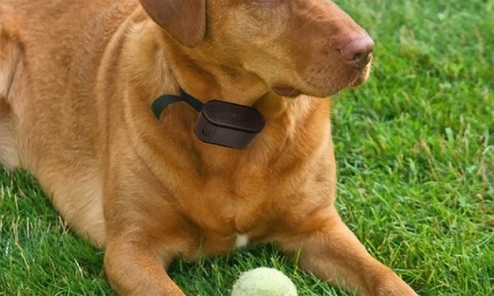 pet zoom electric dog fence