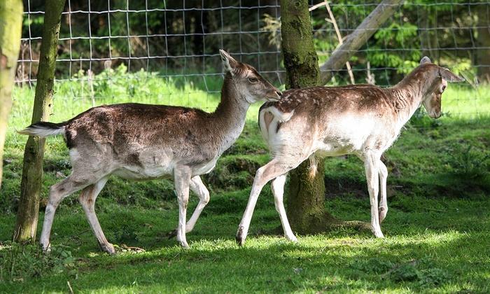Hoo Farm Animal Kingdom - Telford: Hoo Farm Animal Kingdom: Family Entry for £20 (46% Off)