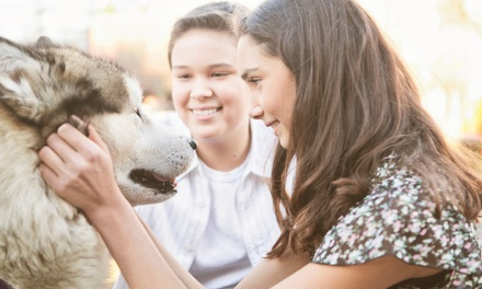 $19 for an Accredited Online Animal-Psychology Course from Holly and Hugo ($175 Value)