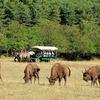 Safari guidé à pieds à Andon