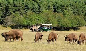 Reserve Biologique des Monts D'Azur: Safari guidé à pieds d'1h30 pour enfants et/ou adultes dès 8 € à la Réserve Biologique des Monts D'Azur