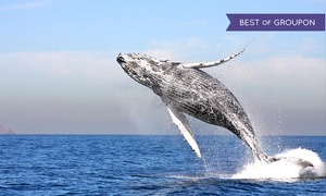 Up to 50% Off 3-Hour Whale-Watching Cruise  at Channel Islands Whale Watching, plus 9.0% Cash Back from Ebates.