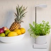 """LED Desktop Hydroponics and Grow-Light System-Extendable (7.5""""-17.5"""")"""