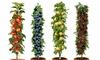 Juego de 4 u 8 árboles de frutas