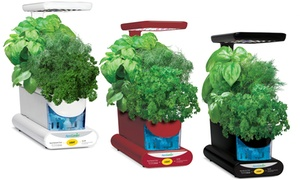 Miracle-Gro AeroGarden Sprout LED System with 3-Pod Gourmet Herbs
