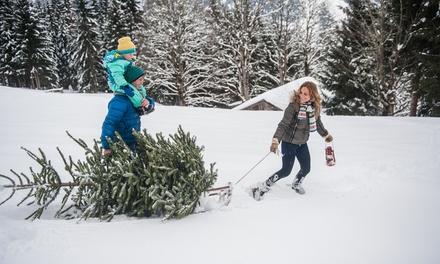 Tannenbaum Selber Schlagen.Erlebnistag Mit Weihnachtsbaum Selber Schlagen Inkl