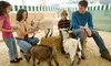 Farm To You Revue: $138 for $250 Worth of Petting-Zoo Visits — Farm To You Revue