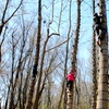 The Adventure Park at Sandy Spring – 57% Off Tree Climbing