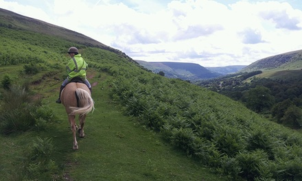 OneHour Horse Riding Lesson with OneHour Trek for One or Two at Grange Trekking