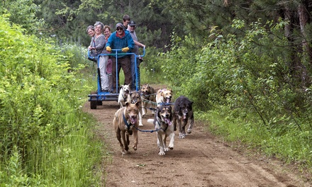 $79 for a Summer Dog-Sledding Trip for Two from Timberland Tours ($160 Value)