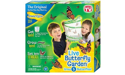 Insect lore butterfly garden groupon for Gardening 4 less groupon