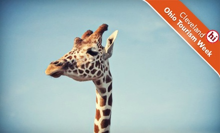 Admission for 1 Person Any Day of the Week  - African Safari Wildlife Park in Port Clinton