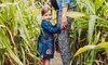 JC Farming's Summer Maize Maze Entry: Child (£4.50) or Adult (£5.50)