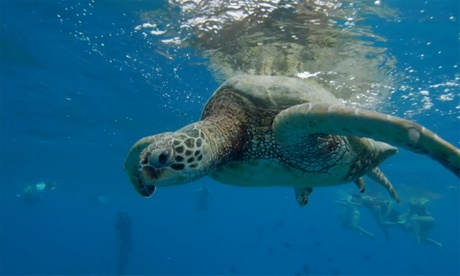 Turtle Snorkeling Adventure for One or Two from Pink Sails Waikiki (Up to 51% Off)