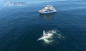 Sea World Whale Watch: 2.5-Hour Whale Watching Tour for $59 with Sea World Whale Watch (Up to $99 Value)
