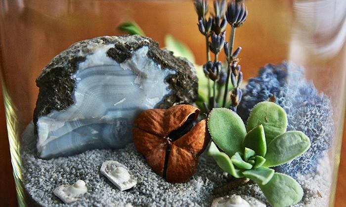 Terrarium and Dish Garden Class  - Dallas: Make a Terrarium or Dish Garden with a Professional Florist