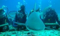 Eco-Divers – Lago Norte: curso de mergulho, foto digital subaquática e batismo para 1 ou 2 pessoas