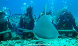 Eco-Divers: Eco-Divers – Lago Norte: curso de mergulho, foto digital subaquática e batismo para 1 ou 2 pessoas