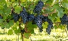 Virtual Wine Tasting Experience