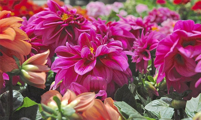 Garden World - Multiple Locations: $19 for $30 Worth of Plants and Gardening Supplies at Garden World