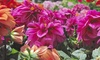 36% Off Plants and Gardening Supplies