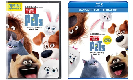 The Secret Life of Pets on DVD or Blu-ray 919dd304-9fa3-11e6-afe3-002590604002