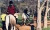 30-Minute Horse Trail Ride