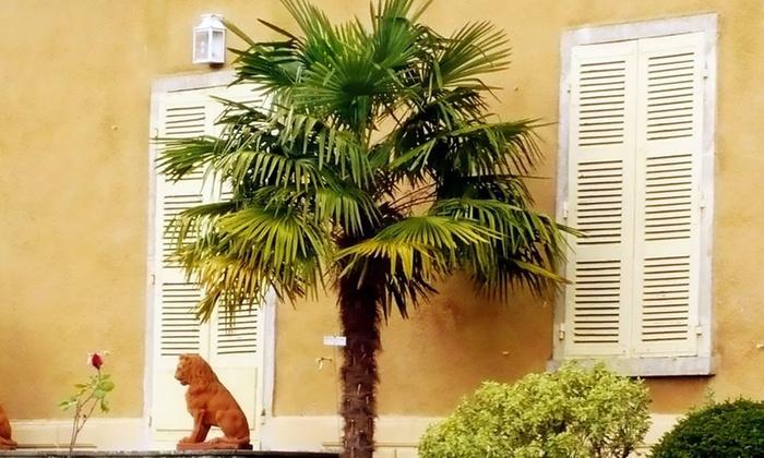 palmiers asiatiques trachycarpus fortunei groupon. Black Bedroom Furniture Sets. Home Design Ideas