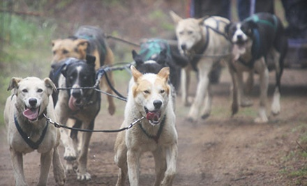 Dog-Carting Adventure for Two in May/June (a $158 value) - Timberland Tours in Bristol