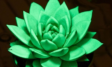 Pair of Glow in the Dark Plants for £19.99 With Free Delivery