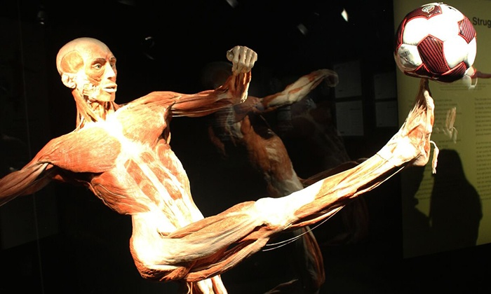 Portland Science Center - Portland Science Center: Body Worlds Admission for Two or Four at the Portland Science Center (Up to 37% Off)