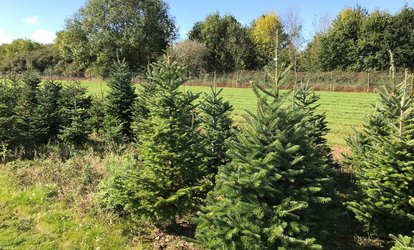 image for Pick a Christmas Tree Experience with a Fraser Fir Tree and Optional Wreath at Newbury Christmas Tree Farm