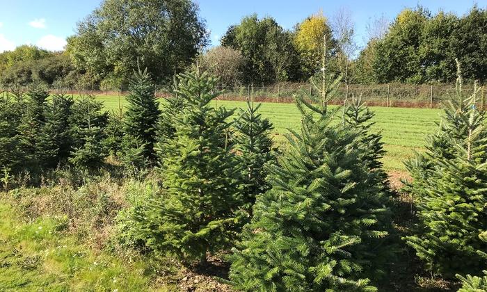 One Pot-Grown Christmas Tree