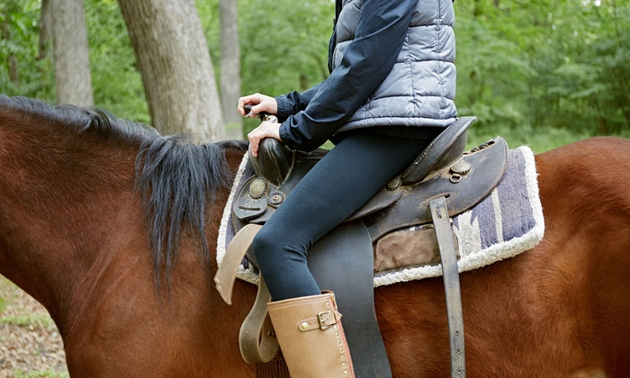 Amethyst Performance Horses - Silver Bullet Stables: Horseback Riding Lessons or Camp at Amethyst Performance Horses (Up to 48% Off). Three Options Available.