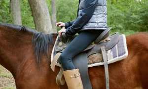 Horseback-riding Lesson For One Or Two At Madison Horse Connection (up To 59% Off)